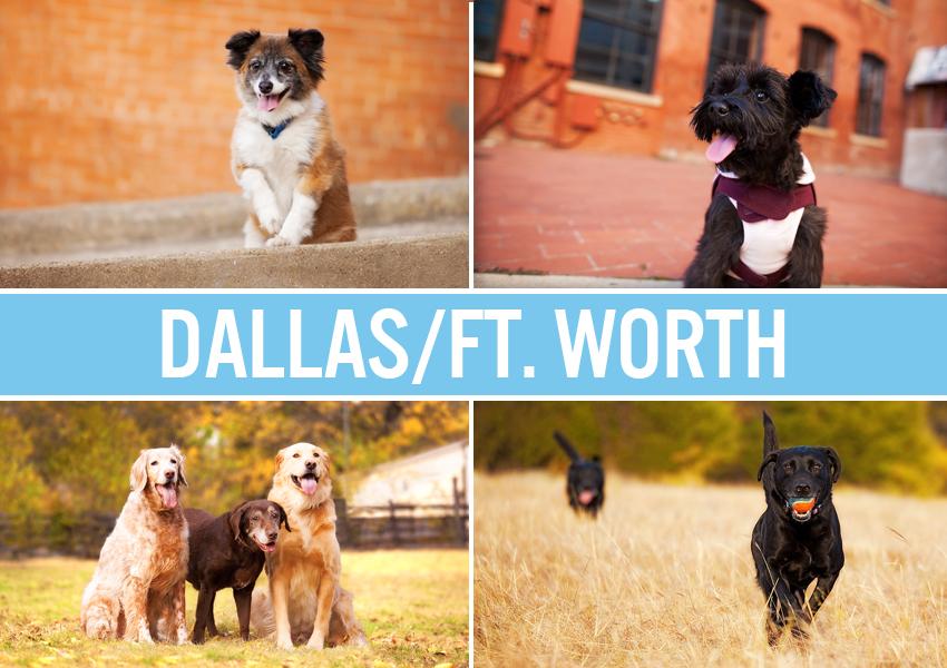 Dallas Fort Worth Dog Photographer