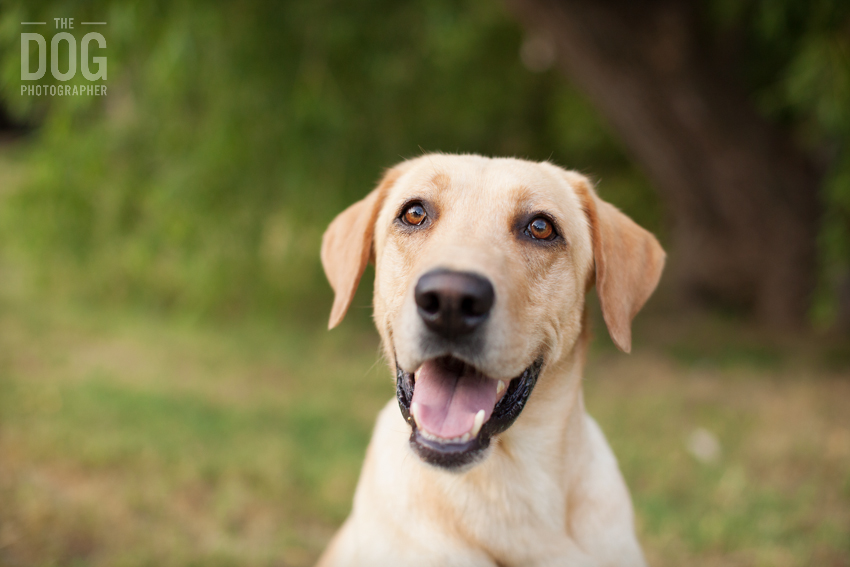 ... >> Pet portraits by the Dog Photographer   Dallas pet photography: thedogphotographer.com/a-hunting-dogs-portraits
