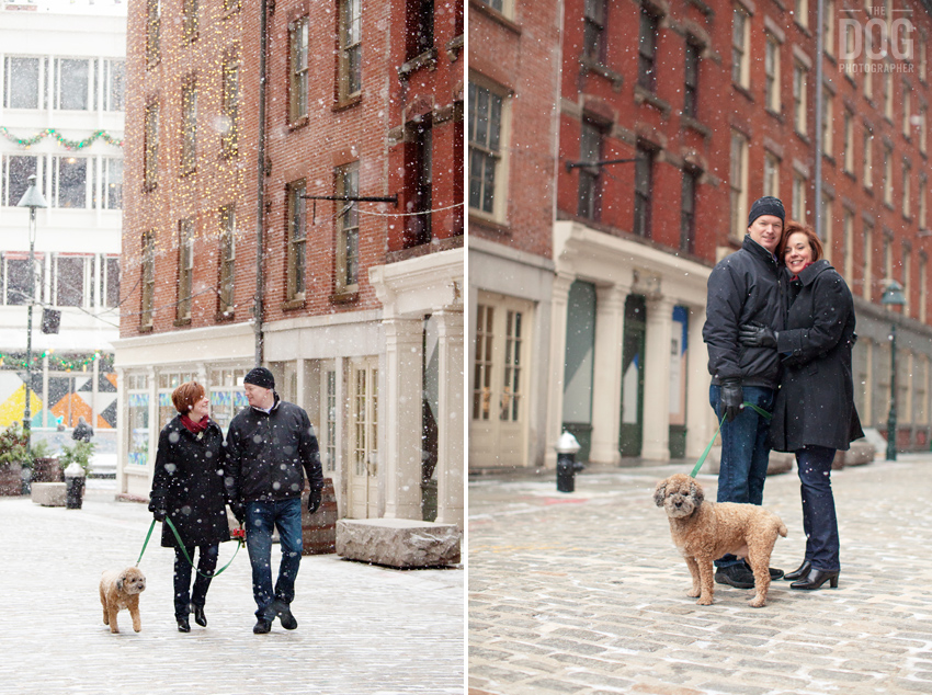New York Dog Photographer Portraits