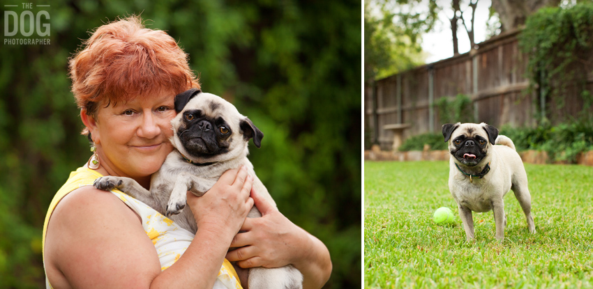 Pug Family Photos