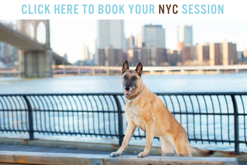 Book Online NYC Pet Photo Session