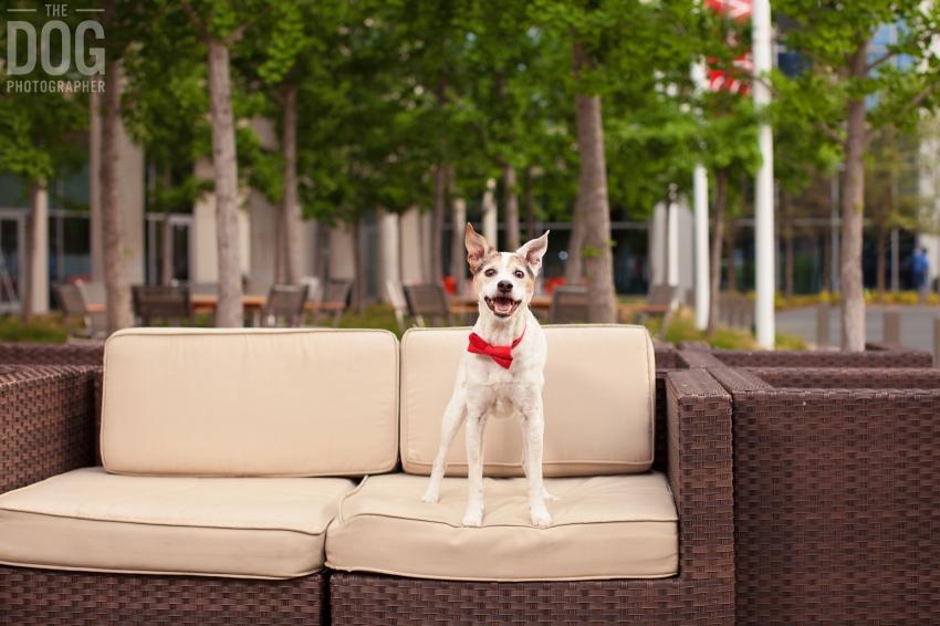 Dog Outdoor Portraits