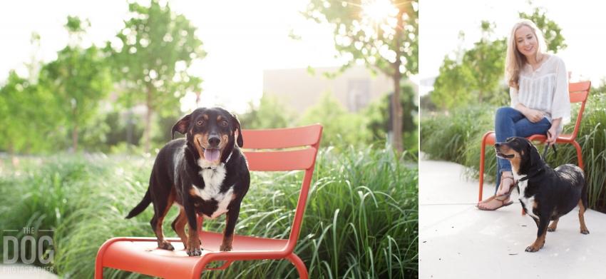 DogPhotography Dachsund